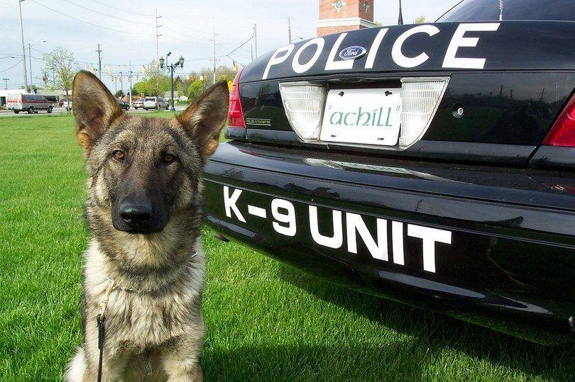 Secret Service dogs K9