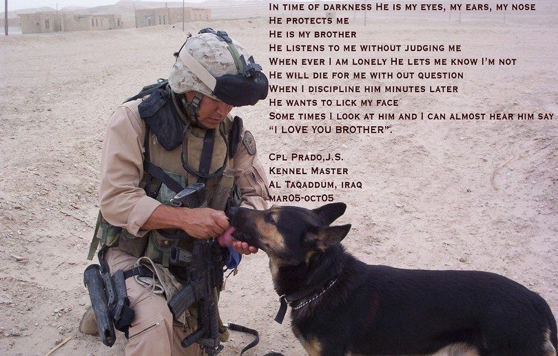 Dogs protects