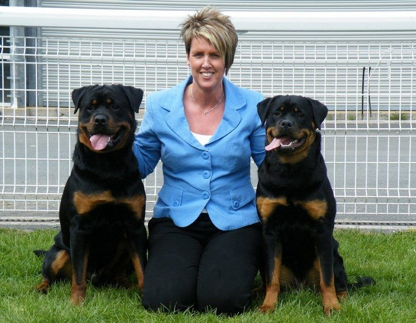 Rottweilers with a woman