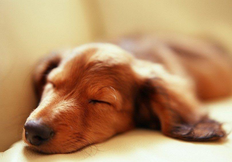 Dog lying on stomach