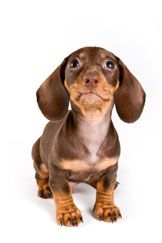 Separation anxiety in your dog