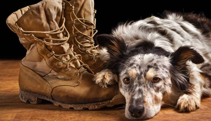 Service dog gear must-haves: what's most important for owners?