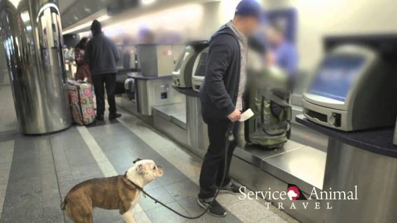 Service Dogs and Air Travel tips