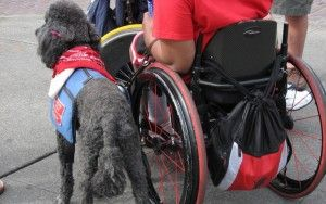 Service dogs: what you need to know