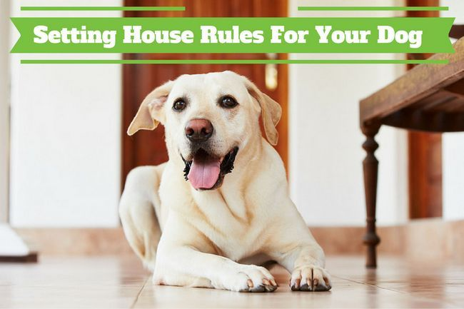 Set house rules for your dog or puppy before getting them home