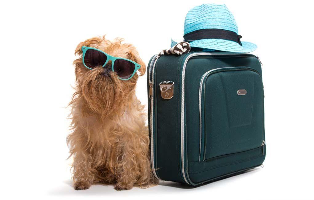 Shipping a dog: ground vs air transportation