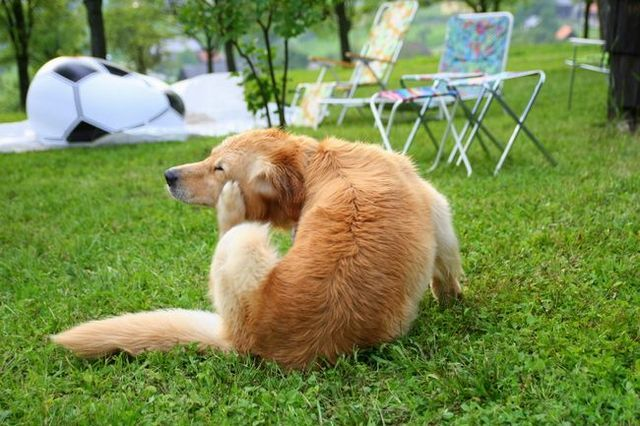 Signs that your dog may have allergies