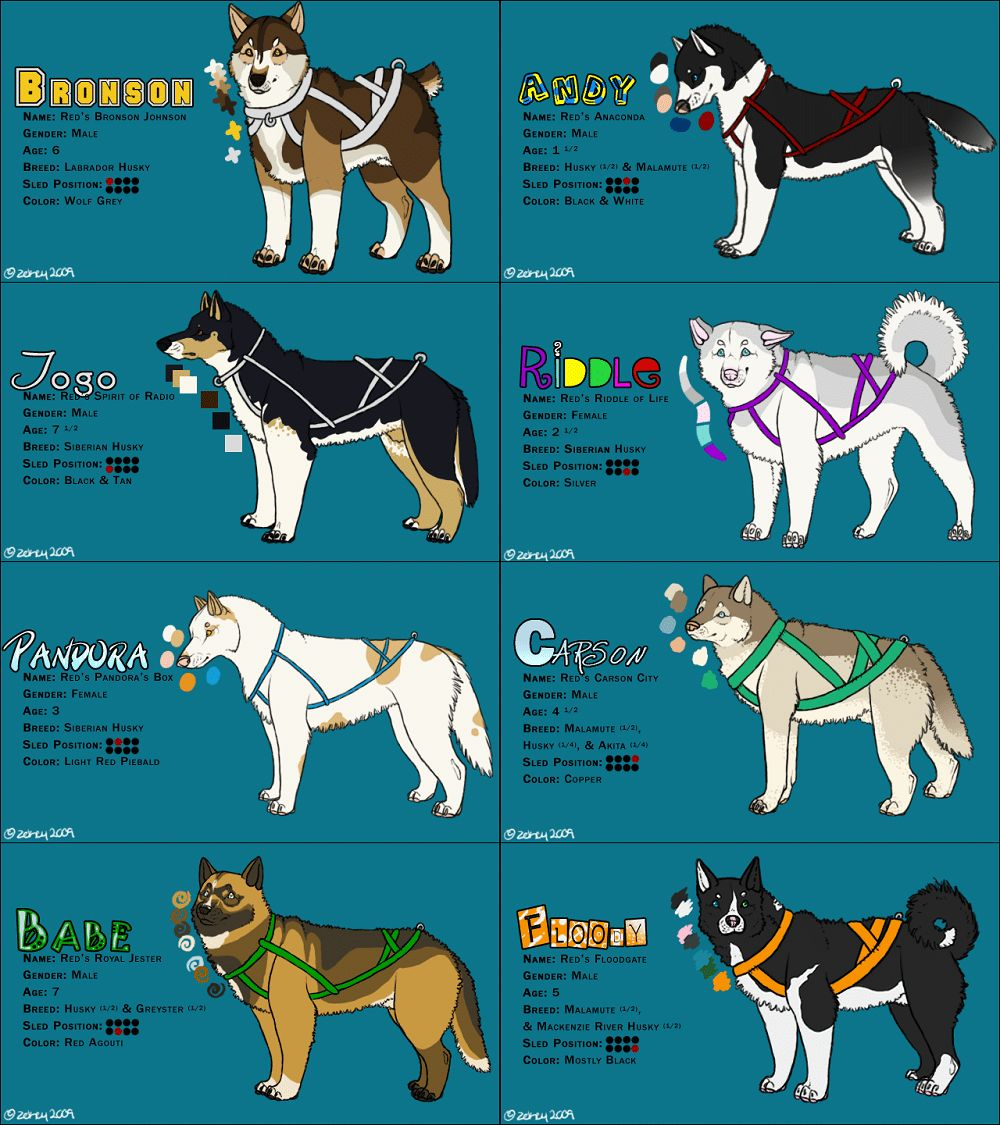 Sled dog breeds: amazing dogs who love a bit of work in the snow