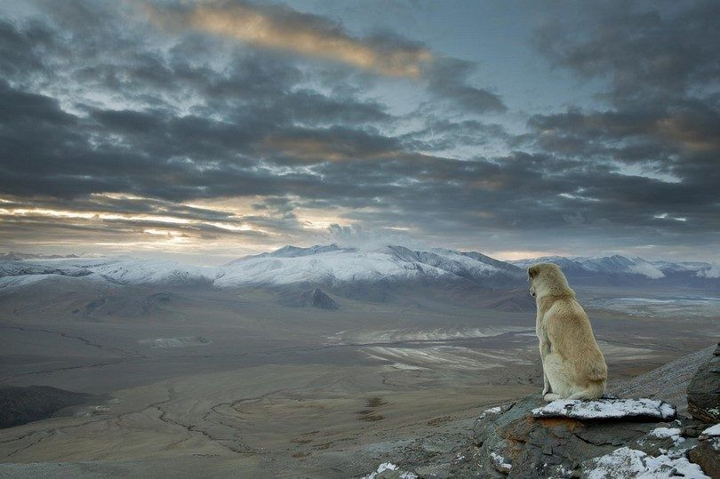 Dog in the middle of nowhere