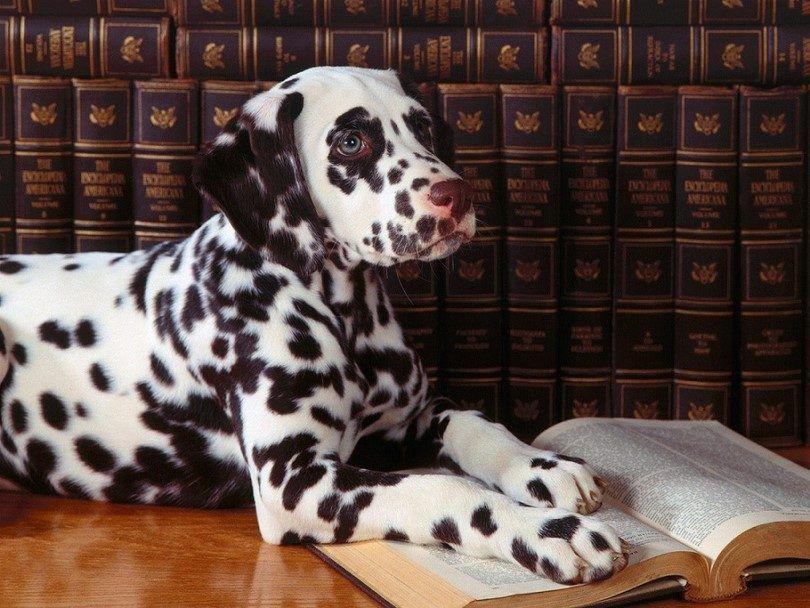 Smart dog reading
