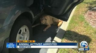 Spca president arrested for rescuing dog tethered in hot parking lot