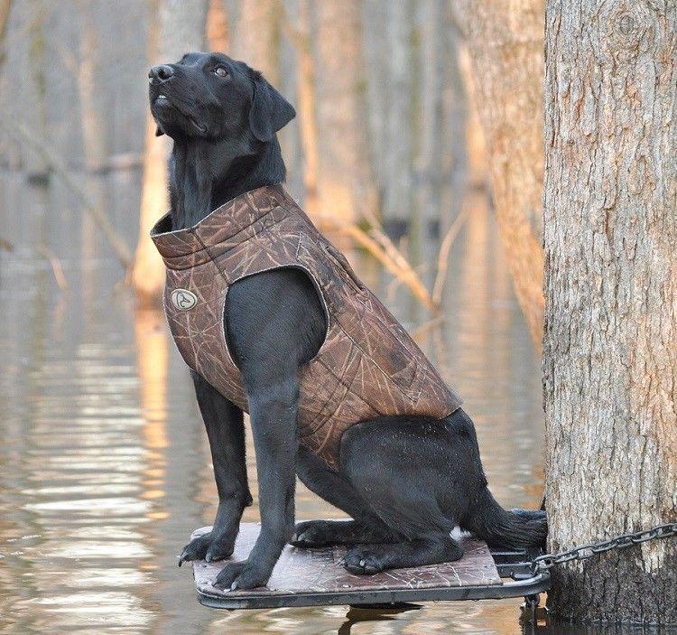 Sport dog sitting
