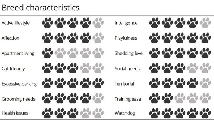 Norwegian Elkhound infographic