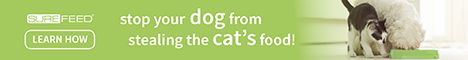 Stop your dog from stealing your cat's food!