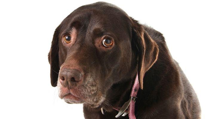 Sunday's recap: mental health illnesses in dogs