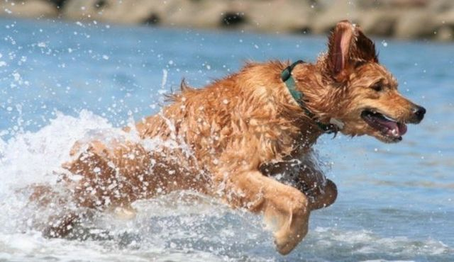Swimming stuff: how to remove water in dogs' ears