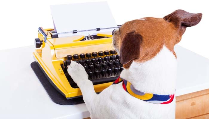 Take your dog to work day: building awareness of shelter dogs