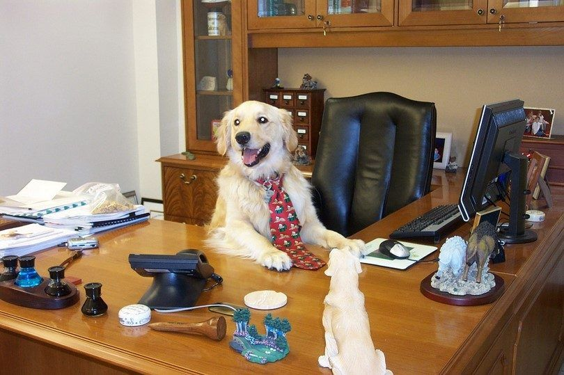 Dog at the desk