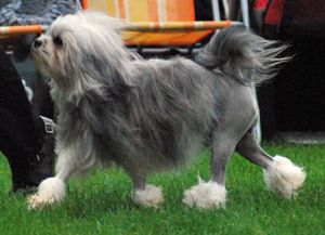 The 10 most unusual dog breeds