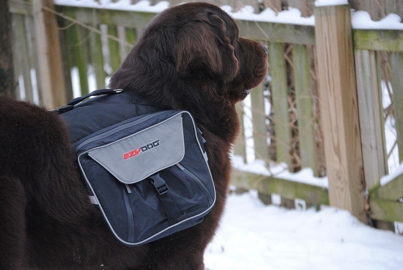 The best dog backpack: more than just an accessory