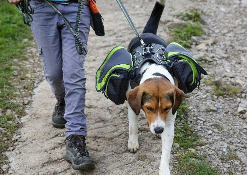 Dog backpack pro harness