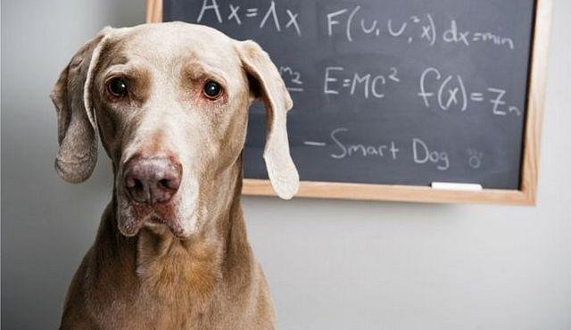 The dog iq test: reliable gauge, or goofy fun?