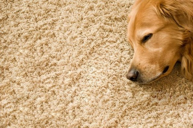 The dog owner's clean carpet guide