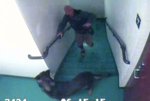 The headlines that broke our hearts: where are these dogs & their abusers now?