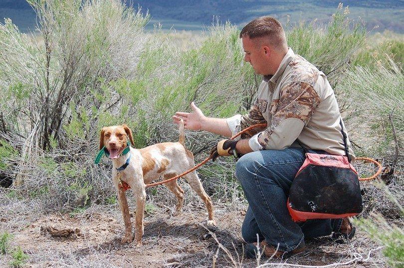 Dog hunter training