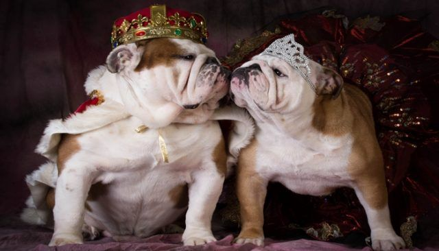 """The royals go to the """"dogs"""""""