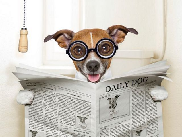 The scoop on poop: what you can tell about a dog by his doodie