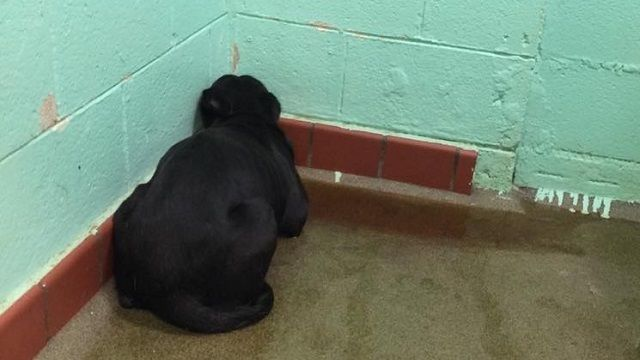 The story behind the heartbreaking photo of a depressed shelter dog