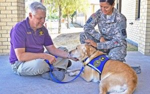 Therapy dog training: how to get your dog certified