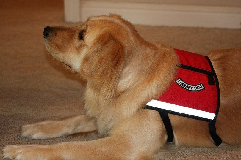 Therapy with a fur baby: a quick guide on how to train a therapy dog