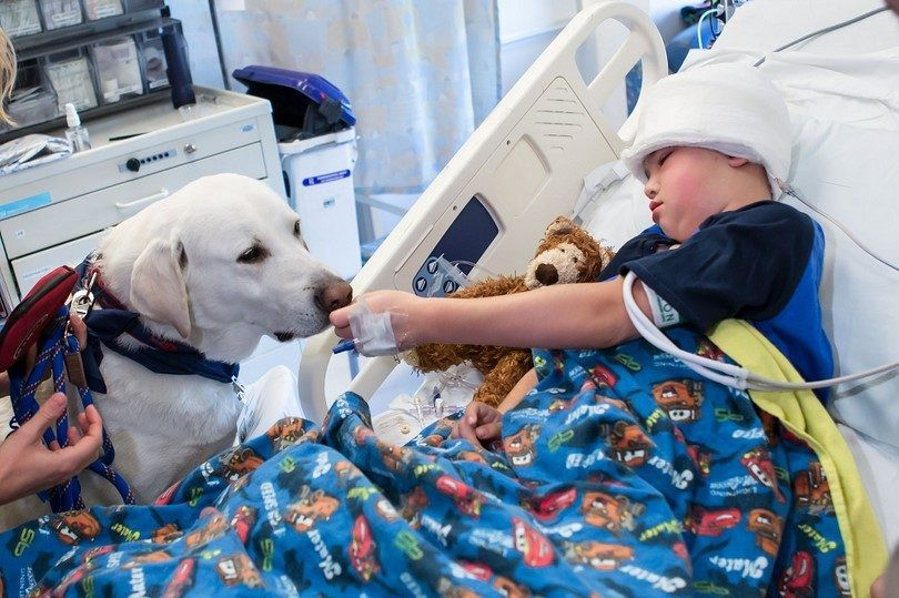 Therapy dog with a boy