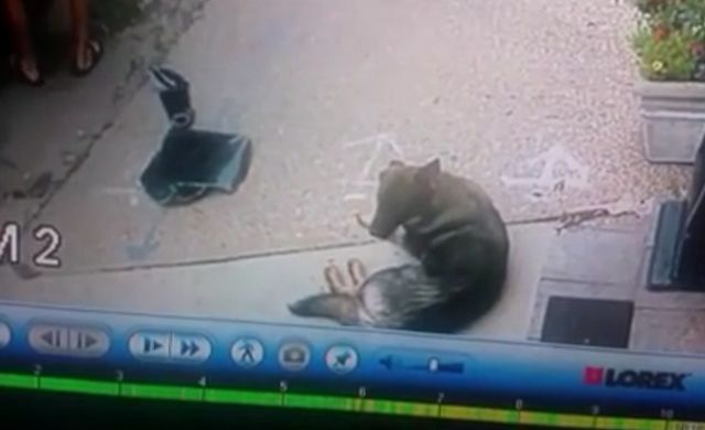 Thieves bust truck window to steal laptop, inadvertently save dog locked inside
