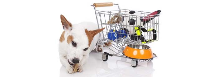 January's best deals on dog products