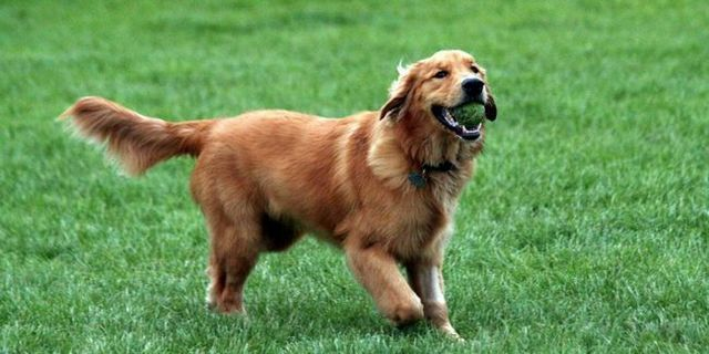 Top 10 best dogs for beginners