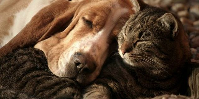 Top 10 best dogs for cuddling