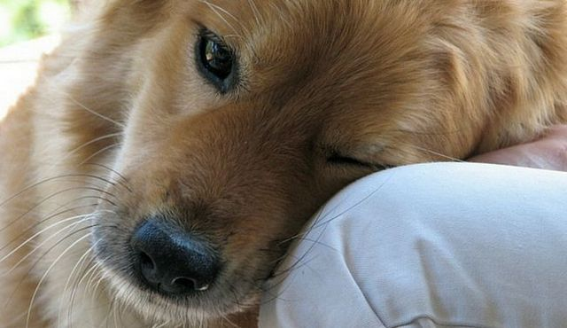 Top 10 best dogs for depression