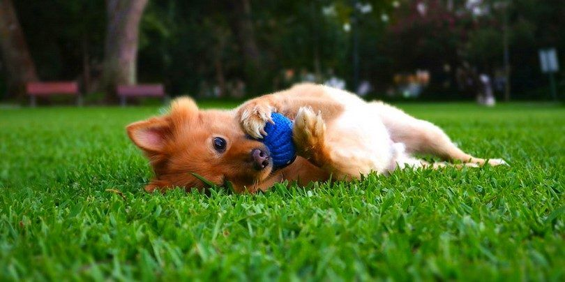 Top 7 best must-have dog care products