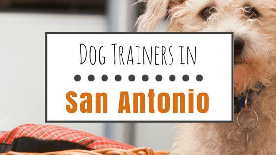Top 8 options for dog training in san antonio