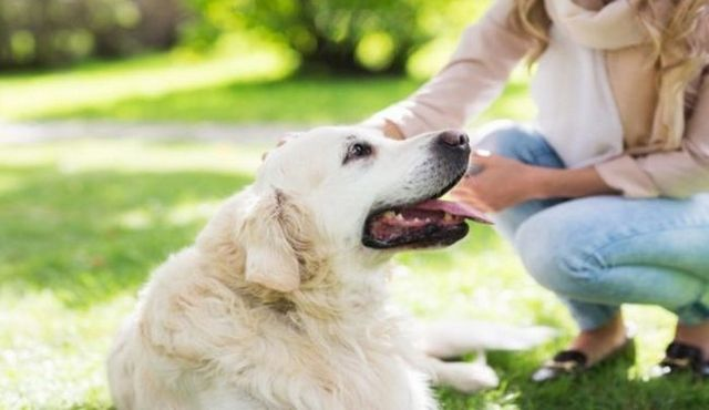 Tracking your behavior: an essential part of dog care