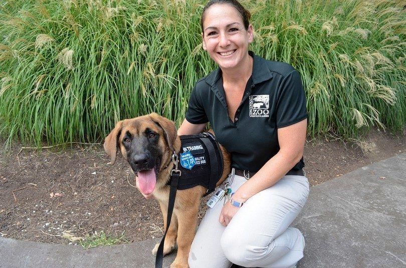 Training a service dog: preparation & steps to follow