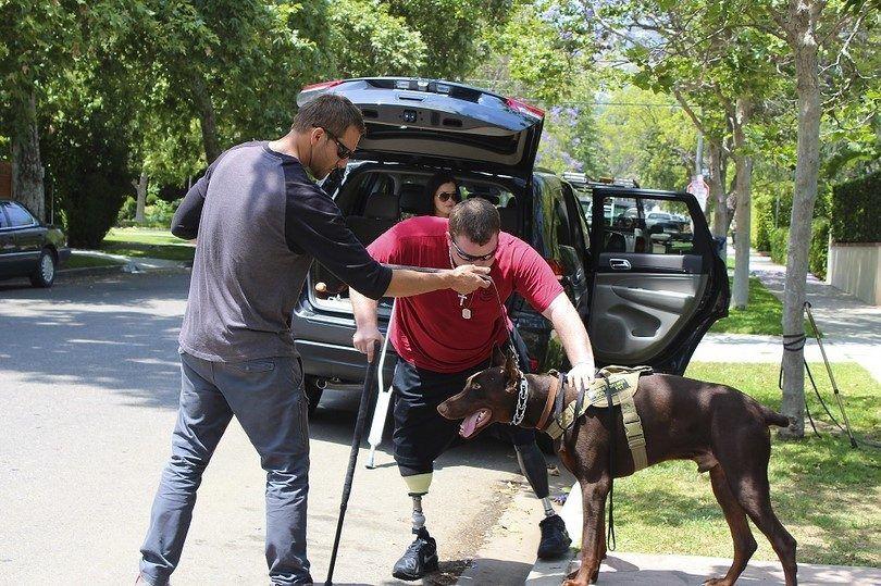Service dog helping