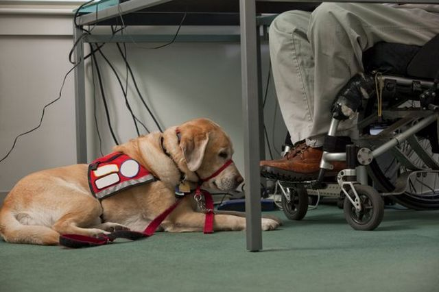 Twenty questions for a service dog trainer
