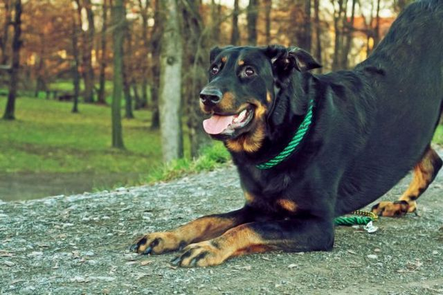 Two fun and easy tricks to teach your dog!