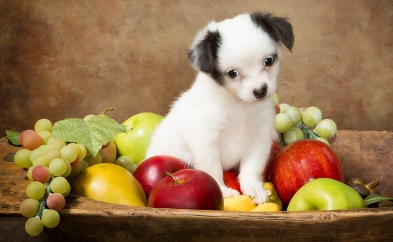 Dog with grapes-toxic