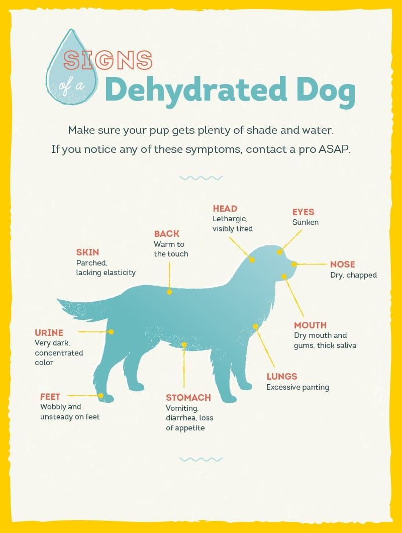 Dehydrated dog sings
