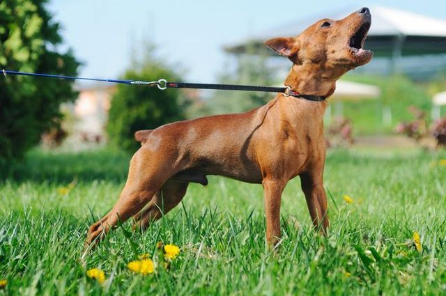 Understanding why dogs bark (and how to make them stop!)